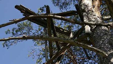 «Гнездо кукушки».