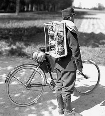 Самокатчик с почтовыми голубями. 1914 г.