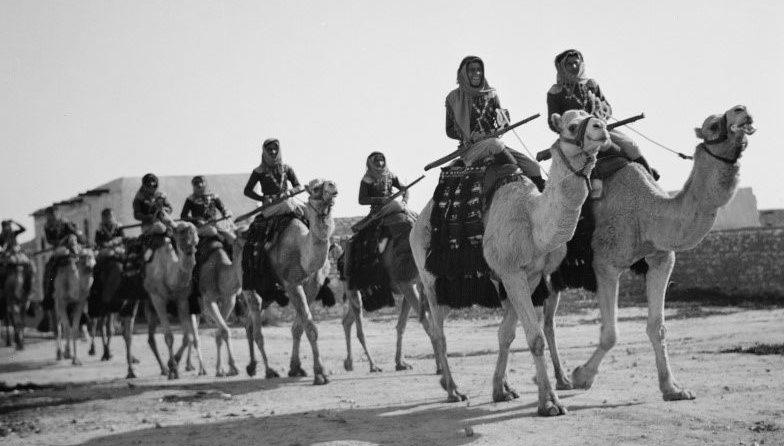 Британские солдаты-арабы на верблюдах. Беэр-Шева, 1940 г.