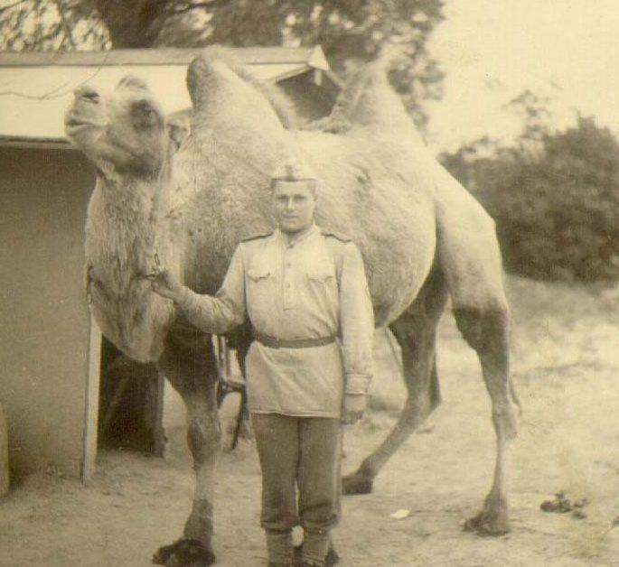 Верблюд Яшка из 902 стрелкового полка. Берлин. 22.05.1945 г.