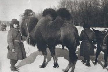 Взятый в плен итальянцами верблюд от Сталинграда дошел до Милана и получил «квартиру» в зоопарке.
