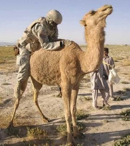 Типичный американский солдат на Ближнем Востоке. И нечего ржать. Так на верблюда легче залезть