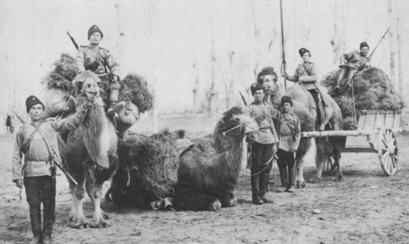 Оренбургские казаки с верблюдами в конце XIX века