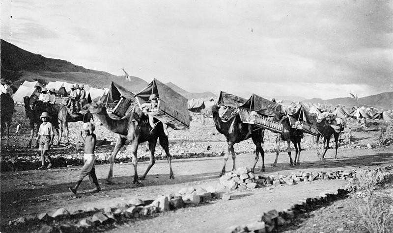 Эвакуация британских раненых солдат на верблюдах на Северо-Западе Индии. 1917 г.