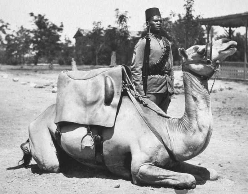 Англо-Египетский Судан – верблюд и солдат британской армии