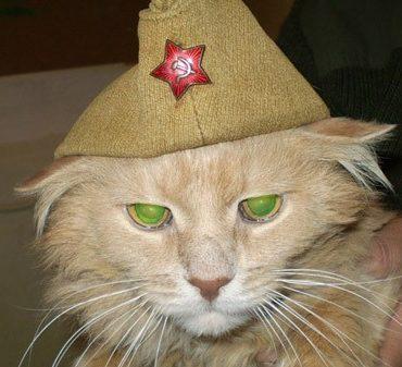 Ленинградская кошка