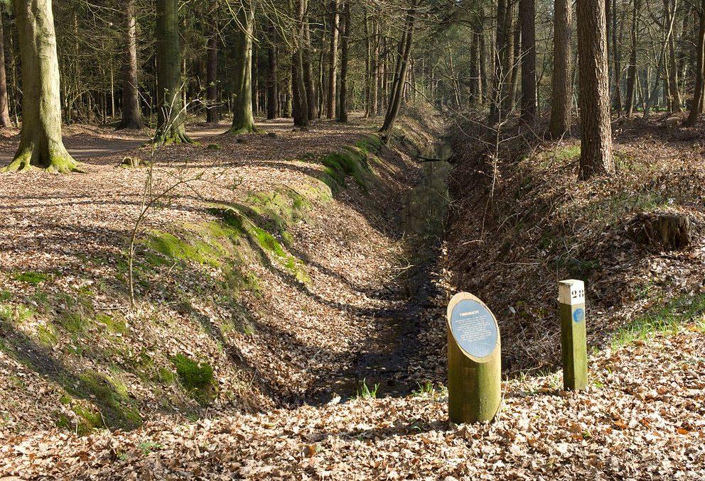 Остатки противотанкового рва в лесу