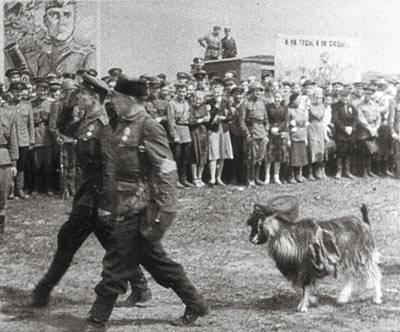 Участник парада – козел по кличке Малыш.