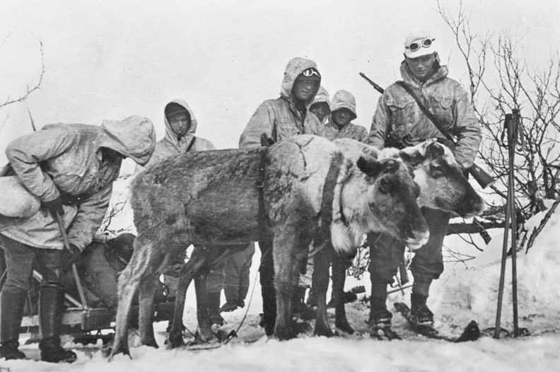 Оленья упряжка горных егерей. Кольский полуостров. 1942 г.