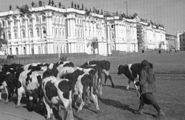 Начало войны. Эвакуация скота. 1941 г.