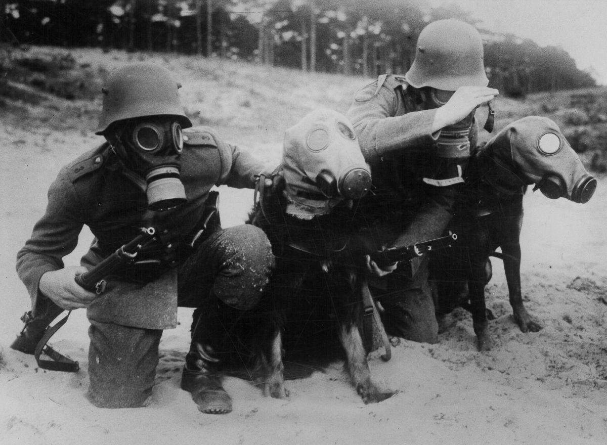 Немецкие солдаты и собаки во время тренировки по химзащите. 1942 г.