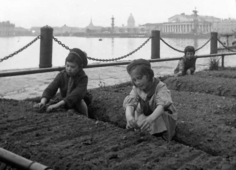 Огороды на газонах. Май 1943 г.