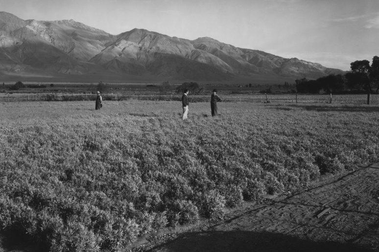 Интернированные на поле в лагере «Манзанар». Август 1942.