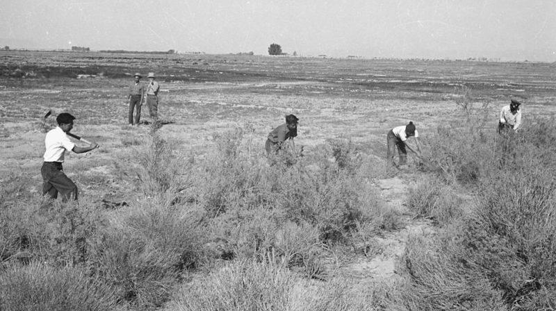 Интерьеры очищают землю для сельскохозяйственного использования. Лагерь «Topaz» (Юта). Октябрь 1942 г.