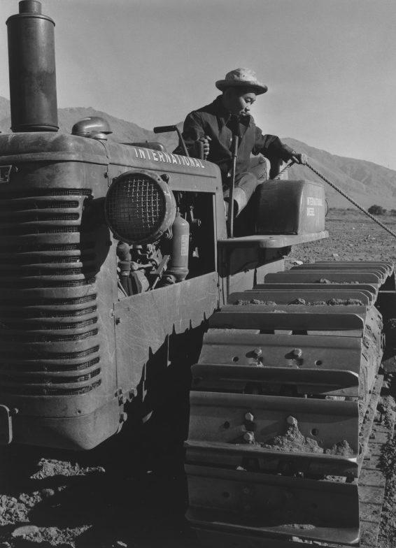 Бенджи Игучи работает на тракторе. Лагерь «Манзанар». 1943 г.