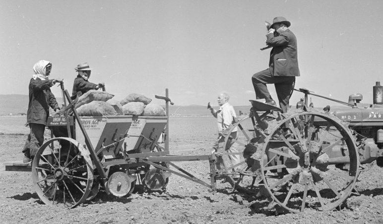 Постановочное фото. Фотокорреспондент газеты из Сан-Франциско снимает японцев, во время работ по посадке картофеля. Лагерь «Tule Lake» (Калифорния). 1943 г.