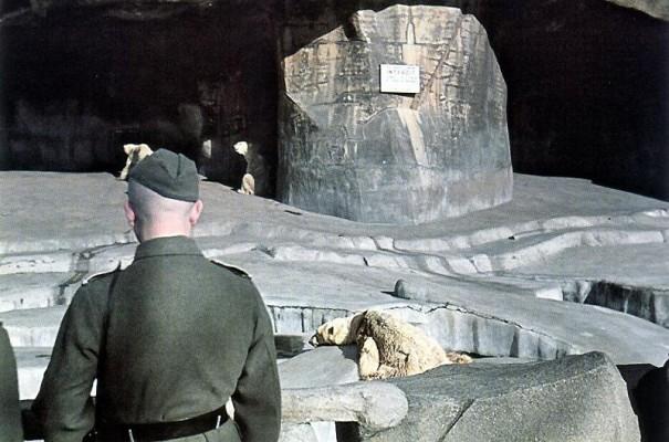 В Венсеннском зоопарке. 1943 г.