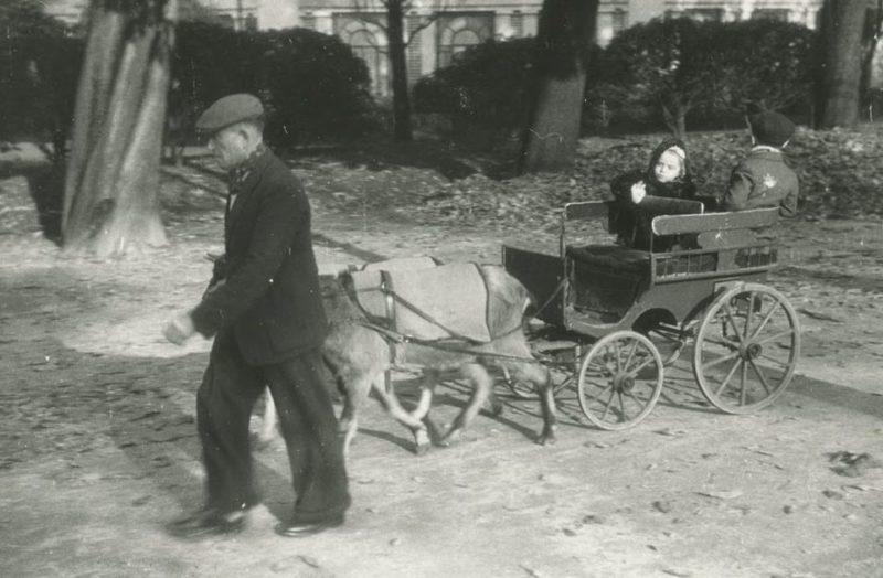 Возврат к конной тяге. Горючего в городе почти не было. 1943 г.
