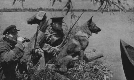 Собаки-пограничники.