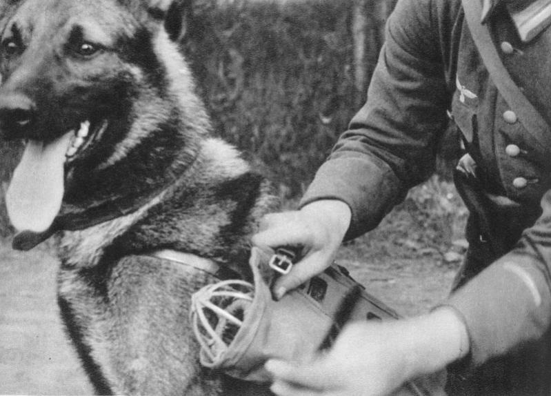 Связная собака с боксом для почтового голубя.