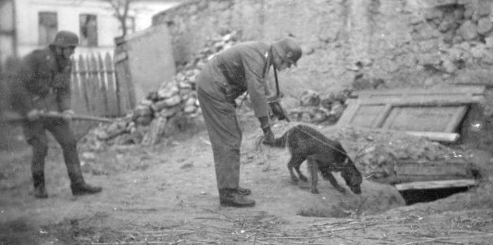 Собаки в борьбе с партизанами.