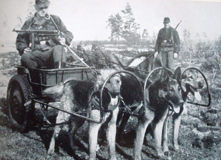 Ездовые собаки на Восточном фронте.