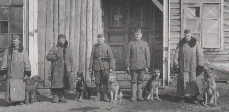 Сторожевые собаки.