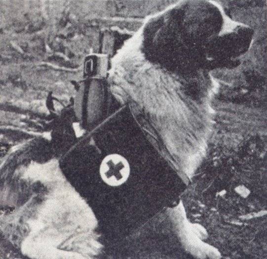 Собаки-санитары.