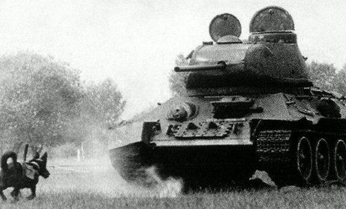 Тренировка собак-истребителей танков.