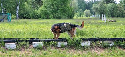 Тренировка собак-подрывников.