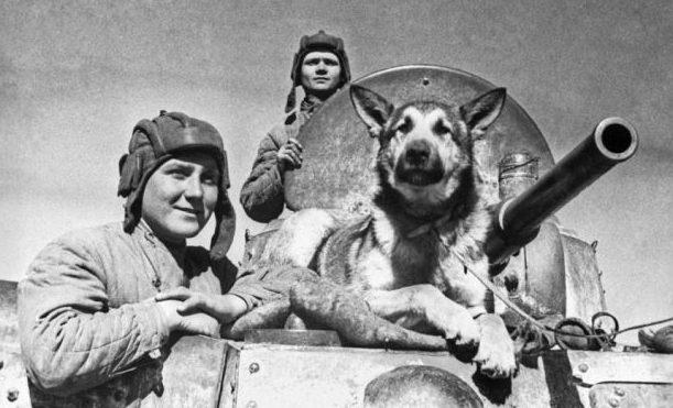 Пес-минер Джульбарс с танкистами.