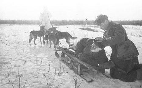 Оказание первой помощи «собачьим экипажем».
