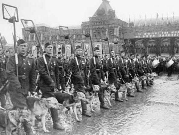Колонна саперов с собаками-минерами на параде Победы.