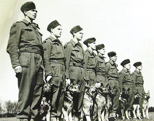 Инструкторы центральной школы военного собаководства Великобритании.