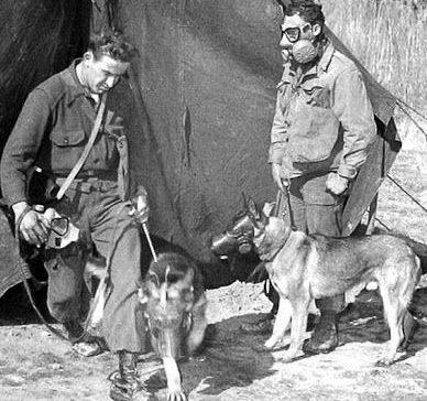 Занятия с противогазом в военной школе собаководства.
