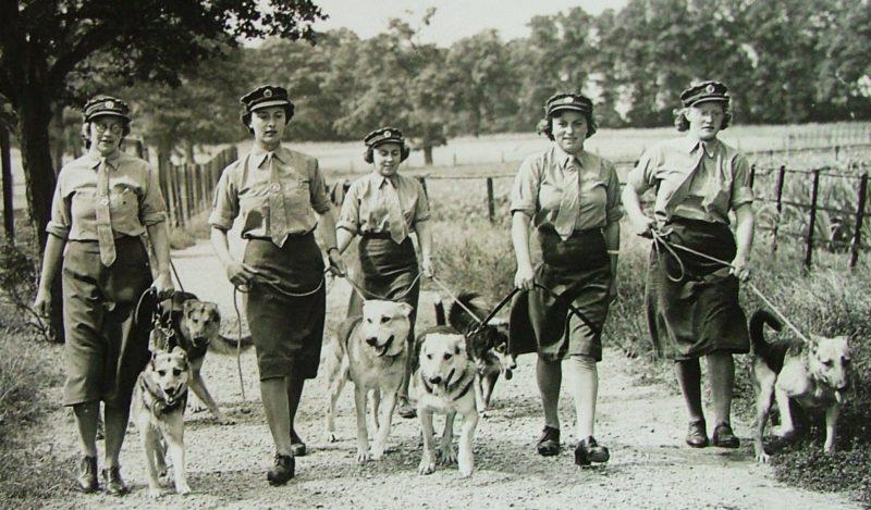 Служащие женской вспомогательной армии со своими питомцами в школе Нортава.