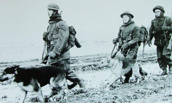 Британские военные с выпускниками школы военных собак.