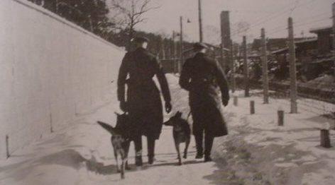 Сторожевые (патрульные) собаки.