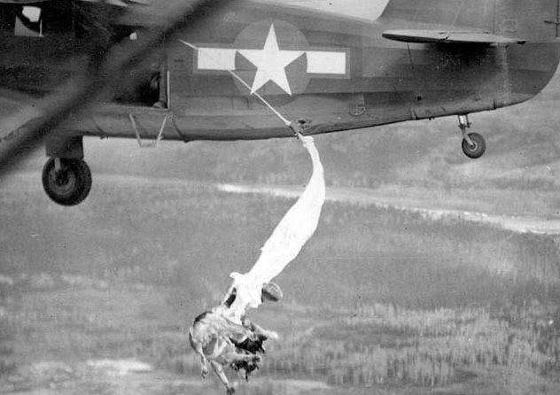 Выброс собаки с парашютом.