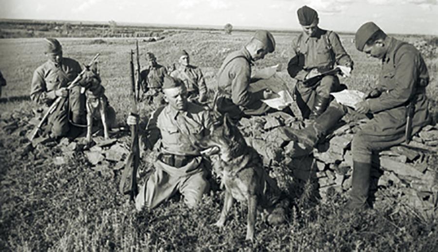 Собаки-истребители танков.