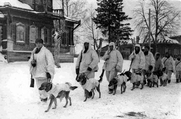 Советские солдаты с собаками-истребителями танков, заряженными взрывчаткой, под Москвой, 1941 г.