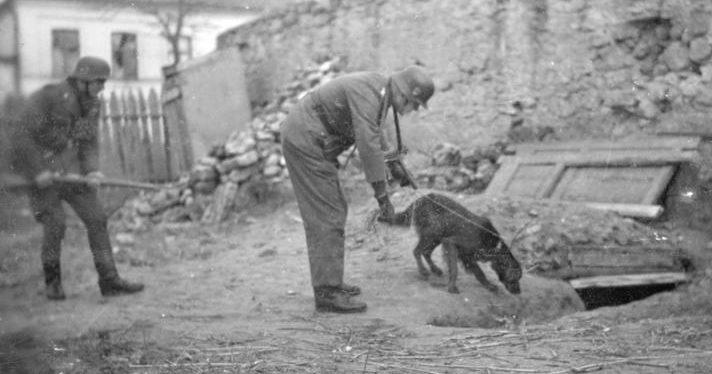 Поисковые собаки ягдкоманд по борьбе с партизанами.