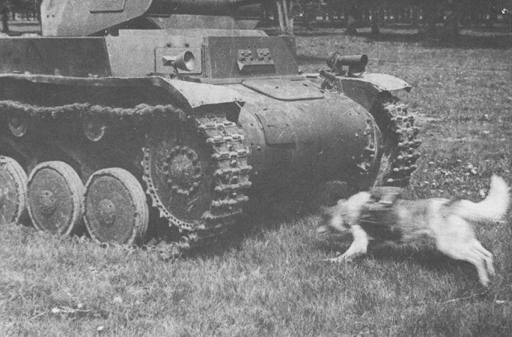 Дрессировка собак-истребителей танков.