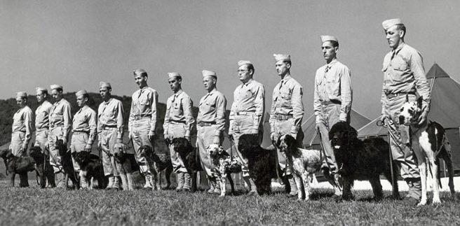 Один из военных центров собаководства.