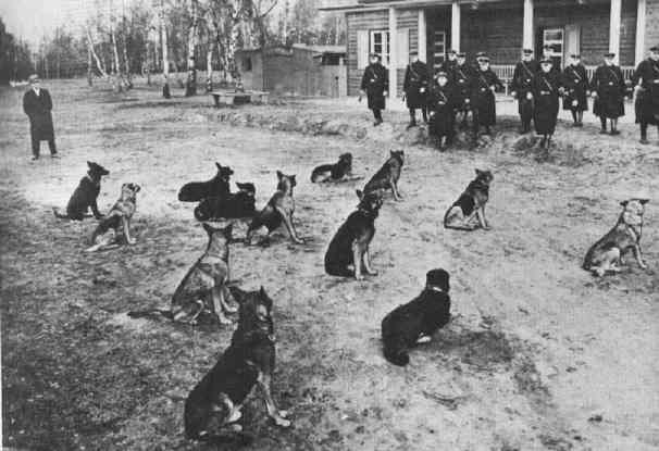Дрессировка собак для Гестапо.