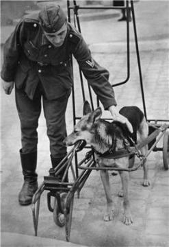 Тренировка собак-поводырей для ослепших немецких военнослужащих.