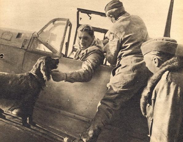 Собаки в авиации.