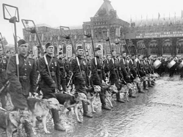 Собаки с проводниками на параде Победы.