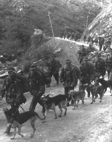 Собаки в горах.