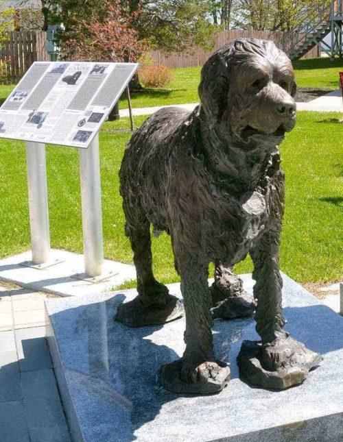 Пес Ганнер, спасший раненных канадцев. Ньюфаундленд. Канада.